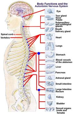 Whats chiropractic spinal manipulation solution? - Health Tips