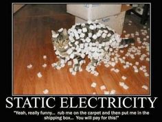 static electricity #cat #funny