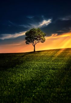 ~~Lone tree by Bess Hamiti~~