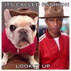 French Bulldog in a Pharrel Williams Hat.