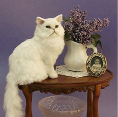 1:12th scale miniature cat on table by artisan Karen Pajutee