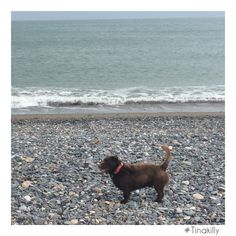Wicklow beach #Tinakilly #CountryHouseHotel Country House Hotels, Local Attractions, Beach, Dogs, Animals, Animales, The Beach, Animaux, Pet Dogs
