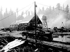 Logging in Skagit County, 1920