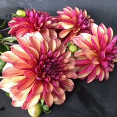 Cut Flowers, Succulents, Dahlias, Gardens, Floral, Plants, Essentials, Flowers, Outdoor Gardens
