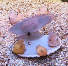 Cute Little Animals, Cute Funny Animals, Cute Creatures, Sea Creatures, Cute Fish, Sea Slug, Underwater Creatures, Marine Life, Animals Beautiful