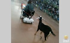 Bring a goat to Walmart day.