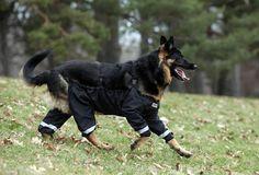 Nova Moda De Calça Para Cães Deixa O Seu Companheiro Limpo E Quente Durante Suas Aventuras Ao Ar Livre