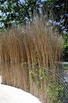 Fill a Gabion Basket With Dried Sticks for a Privacy Screen or Divider