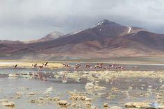 Il riscatto del Sudamerica è anche i suoi paesaggi mozzafiato. Il fotoreportage di oggi di Pequod vi porta sulla ruta del Desierto in Cile, alla scoperta dei colori di Atacama. Guarda qui tutte le foto: http://bit.ly/1Qmhe47
