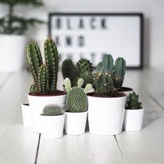 Love the look of different cacti in the same color, but different-sized clay pots.