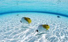 Ocean fish seascapes (1920x1200, fish, seascapes)  via www.allwallpaper.in