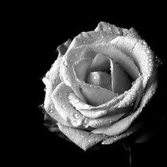En blanco y negro
