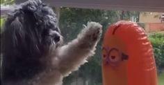 Puppy Loses Epic Fight With Inflatable Toy Minion