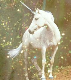 """ The unicorn is the only beast not conceived of human fears ."" Marianne Meyer. Image Pinterest"