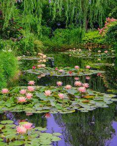 Home Garden Design Rock Garden Design, Garden Landscape Design, Rustic Landscaping, Garden Landscaping, Potager Garden, Water Lilies Painting, Australian Garden, Lily Pond, Garden Architecture