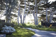 4 Achieving Tips AND Tricks: Coastal Bedding Ideas coastal house colors. Landscaping Near Me, Country Landscaping, Garden Landscaping, Australian Garden Design, Australian Native Garden, Coastal Entryway, Coastal Decor, Coastal Rugs, Coastal Bedding