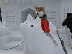 Dog on a dog #hotdog