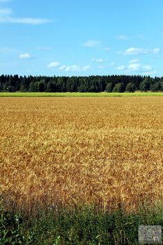 Maaseutua - Teuva © Marjut Hakkola, 2014
