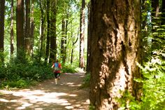 Explore the beautiful Wildwood Trail in Portland's Washington Park for your next urban hiking workout.