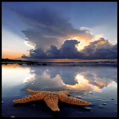 Starfish and clouds.