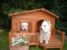 Every westie needs their own space!