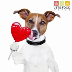 Happy Valentines Day from Vets Food World