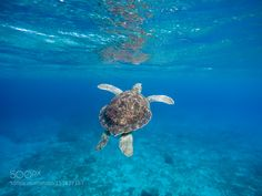 G0604206.jpg by gailjohnson1 #nature #photooftheday #amazing #picoftheday #sea #underwater