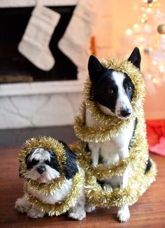 """We thought you said """"treats,"""" not """"tinsel!"""" (would be cute with kids too)"""