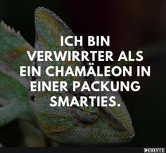 Ich bin verwirrter als ein Chamäleon in einer Packung Smarties. | Lustige Bilder, Sprüche, Witze, echt lustig