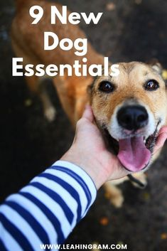 This blog post on new dog essentials provides a checklist of products and ideas on what to buy for a new dog or puppy. It doesn't matter if you rescued your pup from a shelter or bought it from a breeder. This is everything you need to know, buy and have on hand. Join A Gym, Dog Nails, Dog Rooms, Two Dogs, Free Dogs, New Puppy, Dog Owners, Rescue Dogs, Best Dogs