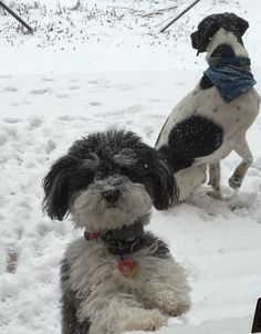 A havanese and a hound Havanese Dogs, Types Of Dogs, Fur Babies, Cute Dogs, Pup, Animals, Animales, Dog Types, Dog Baby