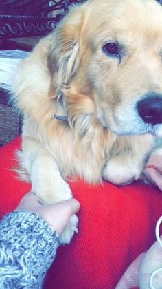 Doug, who will hold your hand every chance he gets.   18 Dogs Who Are Better Than Your Boyfriend