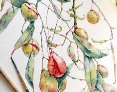 Watercolors by Katerina Pytina Katerina Pytina is a young and very talented watercolor artist from Saratov, Russian Federation. She does some absolutely gorgeous paintings, mainly of flowers and. Watercolor Plants, Watercolor Artists, Floral Watercolor, Watercolor Paintings, Watercolours, Art And Illustration, Watercolor Illustration, Illustrations, Art Floral