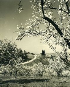 Blossom time near Salem, Oregon by OSU Special Collections & Archives, via Flickr