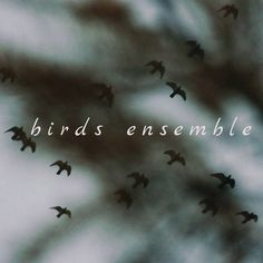 Birds Ensemble | Gülşah Erol