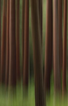 """timber"" by Lee Crawley on 500px.com"