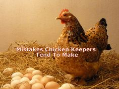 Now it is time for us to share with our readers some things that we didn't like much such as these 5 mistakes chicken keepers tend to make.