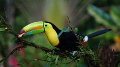 Toucan and a royal looking plant in the background