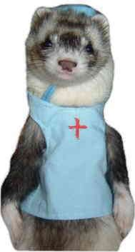 ferret in costume - Google Search