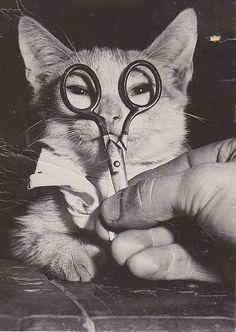 Léonard Foujita. Crazy Cat Lady, Crazy Cats, Funny Animals, Cute Animals, Gatos Cats, Photo Chat, Cat People, Vintage Cat, Cool Cats