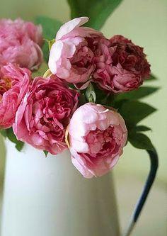 Pink peonies in an enamel jug.  So simple yet lovely! peonies are my handsdown favorite flower, ever!