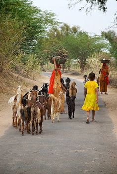 goat herding, Rajasthan, India, Pic by Chawand Singh Chundawat Village Photography, Amazing India, Indian Village, India People, Asia, Largest Countries, We Are The World, Culture Travel, India Travel