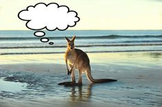 Our Australia independent tours allow you to travel at your own pace with plenty of flexibility to explore. Gold Coast Australia, Australia Tours, Australia Travel, Australia Beach, Perth, Oh The Places You'll Go, Places To Visit, Campervan Hire, Mundo Animal