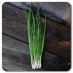 Organic Evergreen Hardy Bunching Onion