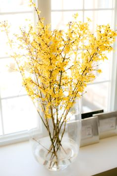 Forsythia in my office.  Makes me look forward to spring.