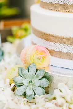 Succulents, burlap and laced cake. Photography by Rebecca Arthurs | Event Planning by Vintage & Lace |