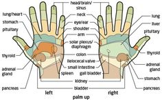 From India, the art of palmistry spread to China, Tibet, Egypt, Persia and to other countries in Europe. Palmistry came to China in around 3,000 B.C. It then progressed to Greece where Anaxagoras practized it. However, modern palmists often combine traditional predictive techniques with psychology, holistic healing, and alternative methods of divination. The practice of chiromancy is generally regarded as a pseudoscience. It should be noted that the information outlined below is briefly…