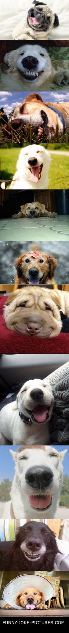 Funny Happy Dog Collection