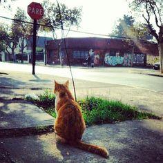 #Cat #esperando #stop #santiago #sanbernardo #life San Bernardo, Kangaroo, Cats, Animals, Waiting, Kittens, Saint James, Life, Gatos