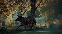 Hannibal Season Moose Dark | En la serie Hannibalhay dos personajes claves, por un lado Will Graham ...